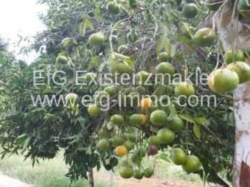 Brejões Farm withTaipa house, fruit trees, lake / EfG 10337-K, 45325-000 Brejões, Brazil