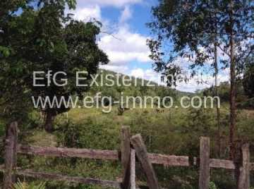 Farm with 350 ha of eucalyptus, pine and wood / EfG 10396-BCF, 45320-000 Santa Inês, Brazil