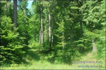 Farm / Ranch for sale in Brasov-Centru, Romania