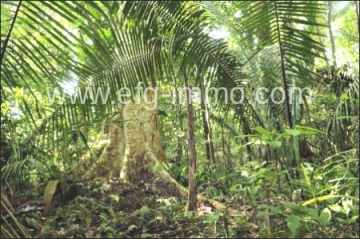 Porto do Sauipe Land for sale in Condominio / EfG 10776-BCF, 48190-800 Porto do Sauípe, Brazil