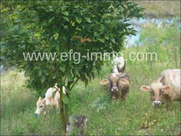 Amargosa Farm 150 acres pasture land, sea, house / EfG 10904-BCF, 45300-000 Amargosa, Brazil