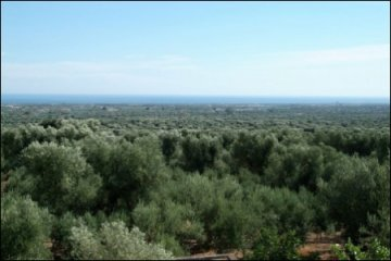 Farm / Ranch for sale in Fasano-Brindisi, Italy