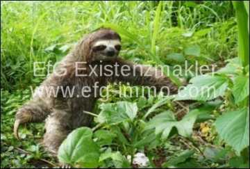 arm 202 hectares of primary forest | EfG V9, 70101 Cariari, Costa Rica