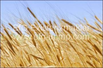 Farm / Ranch for sale in Municipiul Arad-Vest, Romania