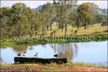 Australia Property 55 ha Farm for sale / EfG 11405F-K, 4310 Boonah, Australia