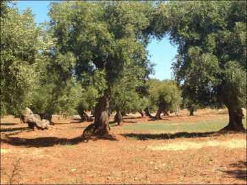 Ostuni wonderful and impressive farmhouse | EfG 1550-IDD, 72017 Ostuni, Italy