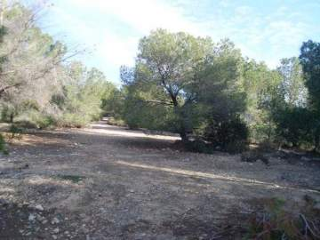 Property land/forestry for sale San Miguel De Sali,  San Miguel De Salinas, Spain