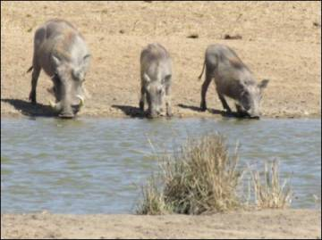 ildlife Farm with 5 Big Five for sale | EfG 10790-SF, 1380 Hoedspruit, South Africa