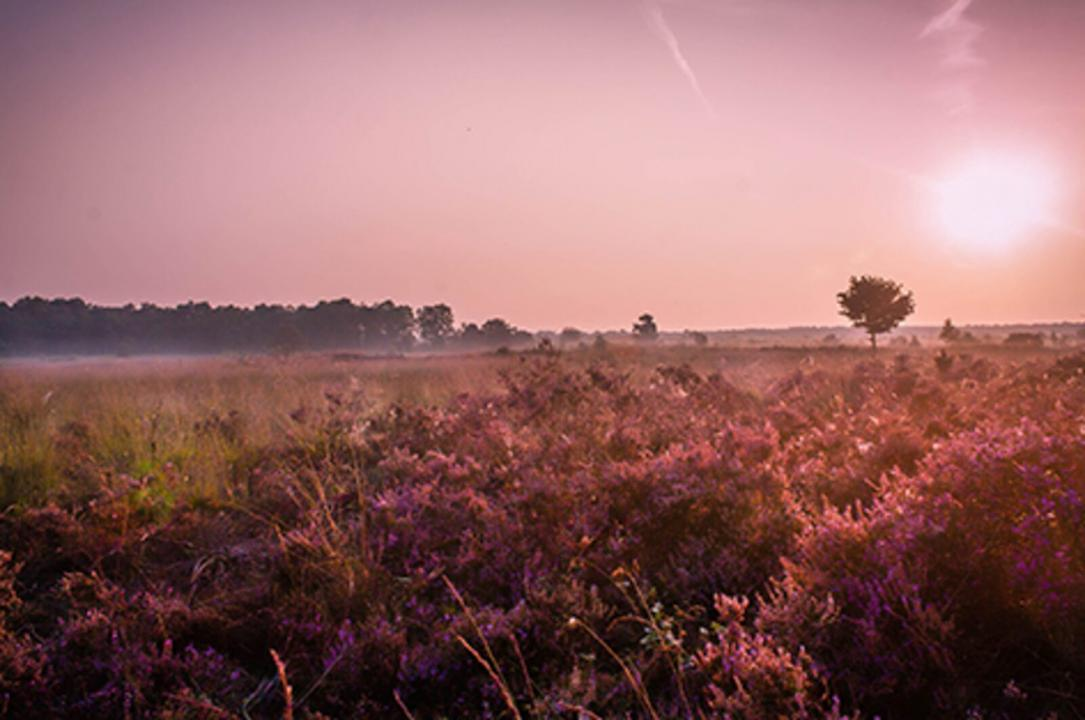 Holiday Rentals for rent in Barneveld, Netherlands