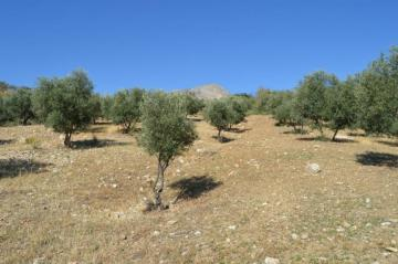 Property land/forestry for sale in Alora, Spain